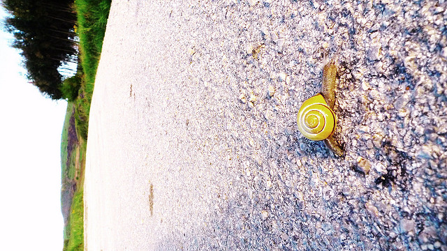 Eine Schnecke überquert in ihrem Tempo eine Straße